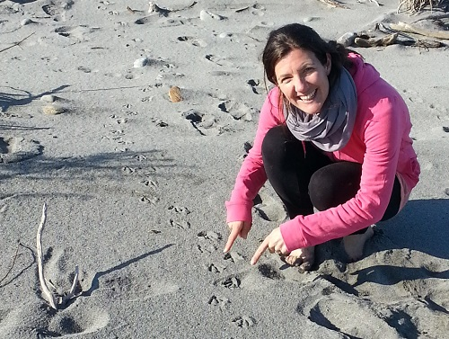 Lucy Waller finds penguin tracks, Hokitika beach Sept 2016