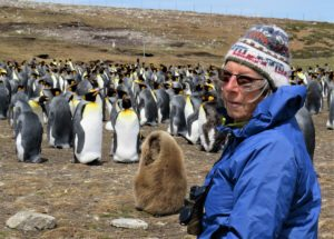 Kerry-Jayne Wilson, Falkland islands Dec 2018 King penguins and chick