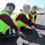 Kaniere School children point to penguin footprints on Hokitika beach